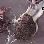 La Prova del Cuoco - Arancini di riso Venere con burrata e gamberi ricetta Roberto Valbuzzi